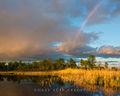 Rainbow over Cattail Marsh print