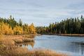 Forest,autumn,minnesota,state park, baptism river