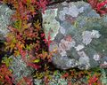 Rock, Lichen and Blueberry print