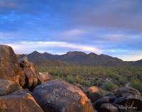 national park, petroglyphs, arizona, saguaro