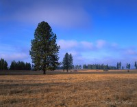 lewis and clark, idaho, national historic trail, prairie