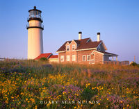 massachusetts, cape cod lighthouse, wildflowers, seashore