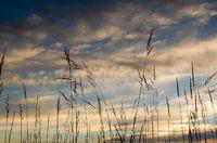 indian grass, minnesota, prairie, dusk