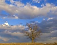 Oak Tree and Sky