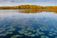 minnesota, chippewa national forest, national forest, lake, autumn, reflections, lily pads