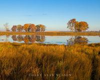 cattail marsh, oak savannah