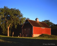 morning light, minnesota, barn