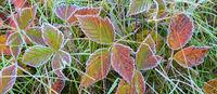 Carlos Avery,Wildlife area,autumn,minnesota,state wildlife management area