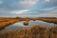 Carlos Avery,cattail marsh,minnesota,wildlife management area