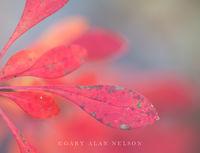 Allemansratt,autumn,leaves,minnesota,red