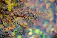 Allemansratt,autumn,minnesota,reflections
