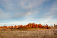 clouds,minnesota,oak trees,oaks,prairie