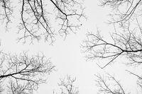 Allemansratt park,oak,tree branches