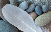 feather,lake superior,patterns,smooth,smooth stones,stones