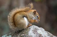 Squirrel,Wildlife area,minnesota,state park