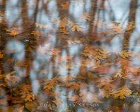 allemensratt,minnesota,oak,oak leaf,reflections,water