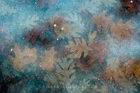 Ice,allemensratt,minnesota,oak,oak leaf,reflections,water
