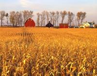 corn, minnesota, farm