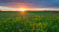 Sunset and Golden Alexanders