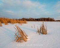 Minnesota, snow, cattails, wildlife area