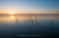lake mary, minnesota, bulrushes