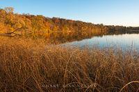bulrushes, minnesota, round lake, autumn