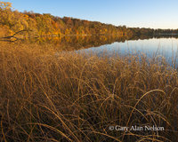bulrushes, round lake, minnesota, lake
