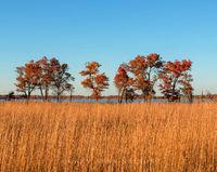 minnesota, oak trees, cedar creek natural area,prairie