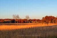minnesota, prairie, birch trees, cedar creek natural area