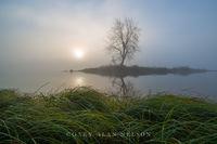 st. croix river, minnesota, island, lone tree, wisconsin, grasses