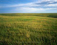 Prairie Grasses to the Horizon
