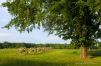 tennessee, peach orchard, shiloh, national military park