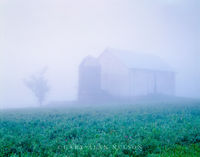 Monroe County, Wisconsin, fog, barn