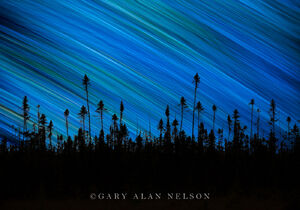 Star Trails over Spruce Forest