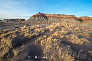 badlands, arizona, petrified forest, prairie grasses, national park