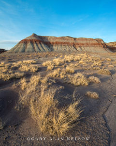 Badlands and Grasses at Petrified Forest