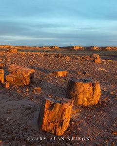 Petrified Wood at Dusk