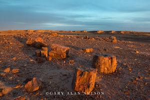 Petrified Forest National Park, national park, arizona, petrified wood, petrified forest