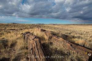 prairie grasses, petrified wood, petrified forest national park, national park, arizona