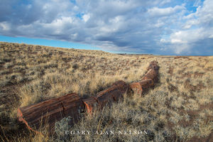 Petrified Wood and Prairie Patterns