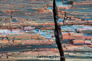 Petrified Wood Grain