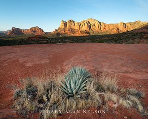 Red Rock and Agave