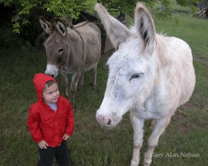 Wild Mules