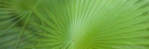 saw palmetto, florida, everglades national park