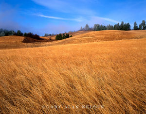 Lewis and Clark National Historic Trail, Idaho, grasses, rolling hills, lolo trail