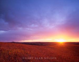 Flint Hills, The Nature Conservancy, Kansas, prairie, konza prairie