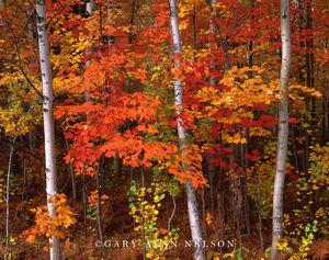 Ottawa National Forest, Michigan, upper peninsula, autumn colors