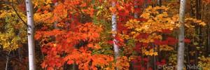 autumn, Michigan