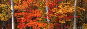 Autumn Colors over Pond