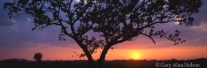 Sun Under Oak
